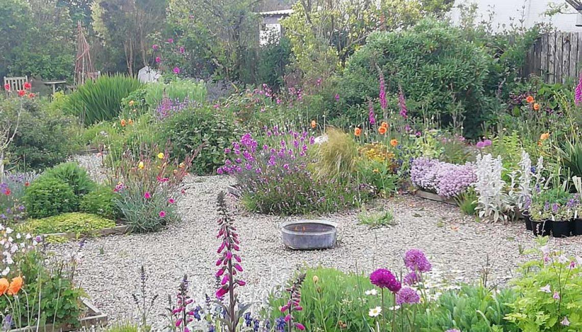Perennial-UK Sown and Grown--St-Davids