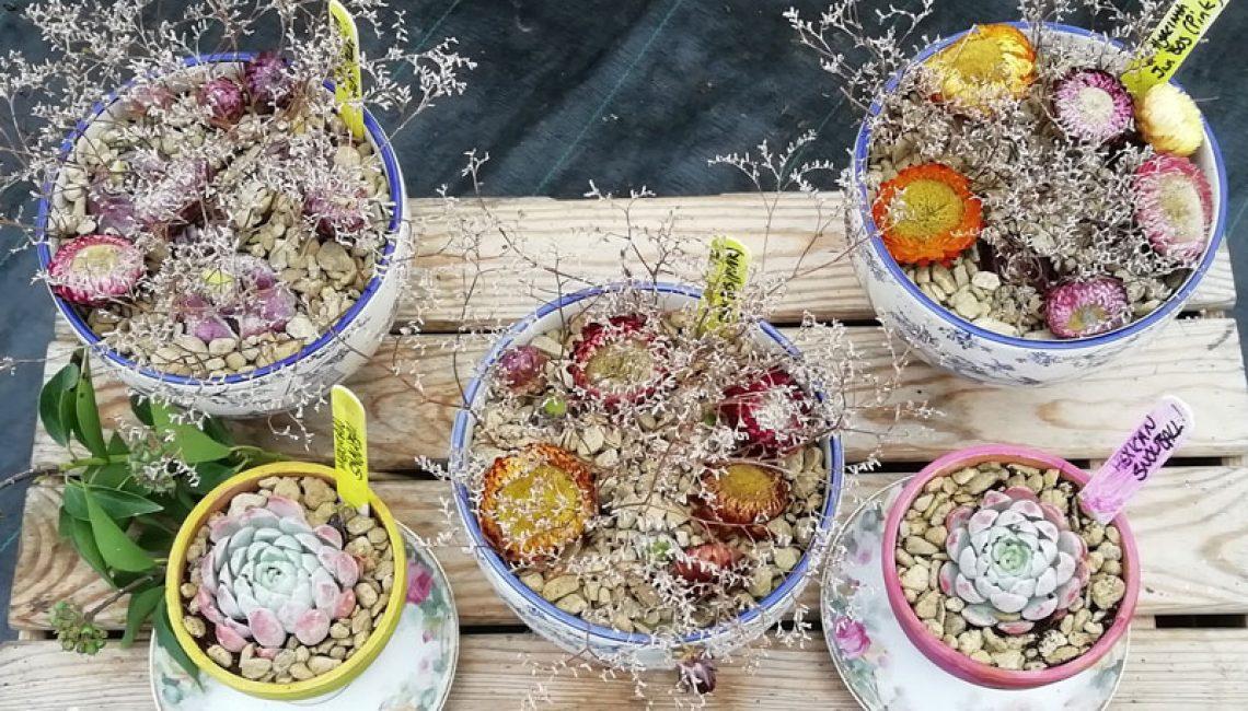 Perennial---Christmas-Pots